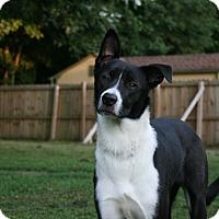 Adopt A Pet :: Petunia - Virginia Beach, VA