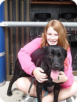 Labrador Retriever Mix Dog for adoption in Lewisville, Indiana - Marley