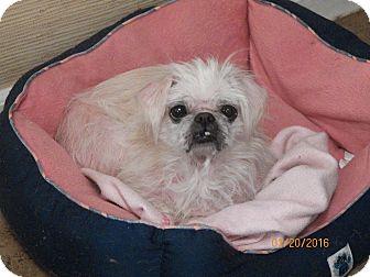 Pekingese Dog for adoption in Mary Esther, Florida - Trixie