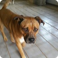 Adopt A Pet :: Turbo - guthrie, OK