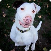 Adopt A Pet :: Wriggly Wrigley - Issaquah, WA
