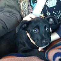 Adopt A Pet :: Tedi - courtesy listing - Evergreen, CO