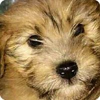 Adopt A Pet :: Mikey - Treton, ON
