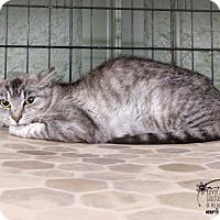 Adopt A Pet :: Alisa - Marlinton, WV