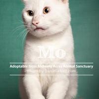 Adopt A Pet :: Mo - Salem, OH