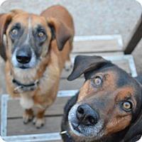 Adopt A Pet :: Guiness & Slaney - Kansas City, MO