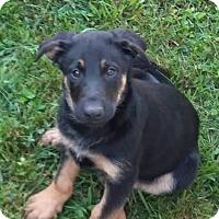 Adopt A Pet :: Atlas - New Oxford, PA
