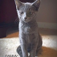 Adopt A Pet :: Cammy - Chattanooga, TN