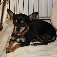 Adopt A Pet :: Bibi - Boca Raton, FL