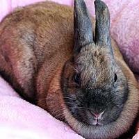 Adopt A Pet :: Spice - Tustin, CA