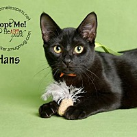 Adopt A Pet :: Hans - Houston, TX