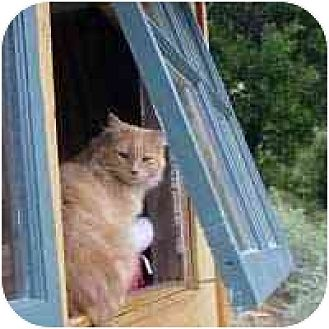 Domestic Shorthair Cat for adoption in Pacific Grove, California - Outdoor Cats