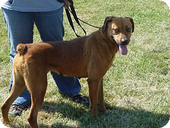 Boxer Mix Dog for adoption in Zanesville, Ohio - # 204-12 @ Animal Shelter