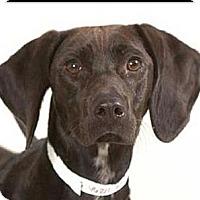Adopt A Pet :: Martini - Lancaster, OH