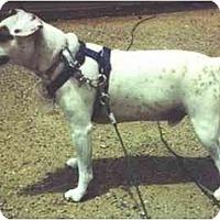 Adopt A Pet :: JEREMIAH - Scottsdale, AZ