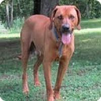 Adopt A Pet :: Red - Staunton, VA