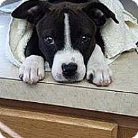 Adopt A Pet :: Ariel - Orlando, FL