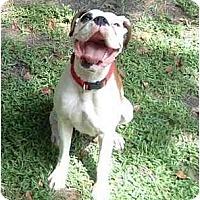 Adopt A Pet :: Milkshake - Gainesville, FL