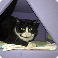 Adopt A Pet :: Collette - Medina, OH