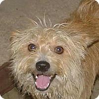 Adopt A Pet :: Allie - North Little Rock, AR