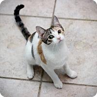 Adopt A Pet :: Annie - San Antonio, TX