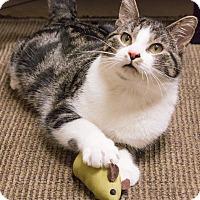 Adopt A Pet :: Jackson Galaxy - Chicago, IL