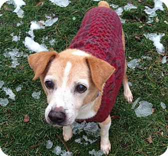 Beagle/Terrier (Unknown Type, Small) Mix Dog for adoption in Madison, Wisconsin - Lennox