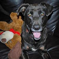 Labrador Retriever Mix Dog for adoption in Alpharetta, Georgia - SweetCocoa