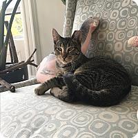Adopt A Pet :: Templeton - Brooklyn, NY