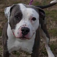 Adopt A Pet :: Moose - Martinsville, IN