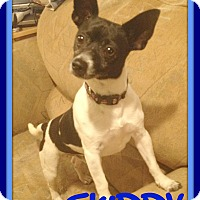 Chihuahua Mix Dog for adoption in Jersey City, New Jersey - SKIPPY