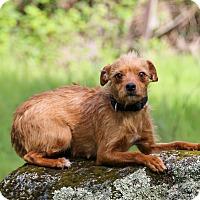 Adopt A Pet :: Lola - Auburn, CA