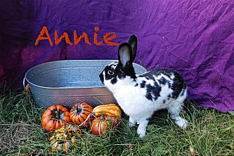 Other/Unknown Mix for adoption in Elizabethtown, Kentucky - Annie