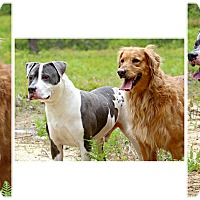 Adopt A Pet :: Pepsi & T-Bone - Forked River, NJ