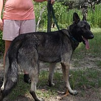 Adopt A Pet :: Shadow - Citrus Springs, FL