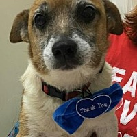 Adopt A Pet :: Aaron - Centerville, GA