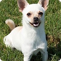 Adopt A Pet :: Skittles - Patterson, CA