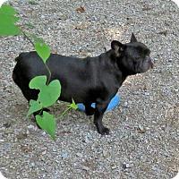 Adopt A Pet :: Jackee  X - Nixa, MO