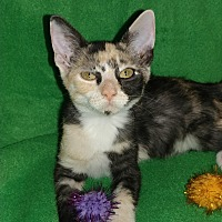 Adopt A Pet :: Nellie - Scottsdale, AZ