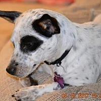 Adopt A Pet :: Sprinkles - Bradenton, FL