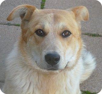 Cattle Dog Mix Dog for adoption in Pulaski, Tennessee - Jack