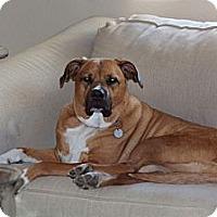 Adopt A Pet :: Knute - Gilbert, AZ