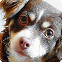 Adopt A Pet :: Miss Moxxie - Bluff city, TN