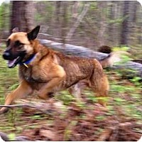 Adopt A Pet :: Titus - Conyers, GA