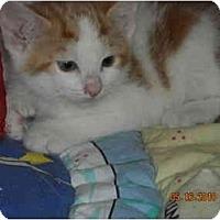 Adopt A Pet :: Armani - Riverside, RI