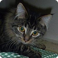 Adopt A Pet :: Speedy - Hamburg, NY