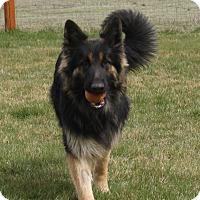 Adopt A Pet :: Ziggy - Bend, OR