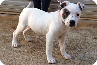 Terrier (Unknown Type, Medium)/Mixed Breed (Medium) Mix Puppy for adoption in Simpsonville, South Carolina - Loretta