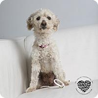 Adopt A Pet :: Skye - Inglewood, CA