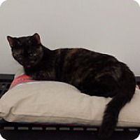 Adopt A Pet :: Maude - Orillia, ON